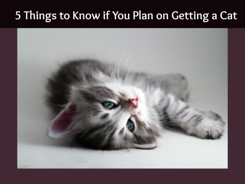 5 Things to Know if You Plan on Getting a Cat