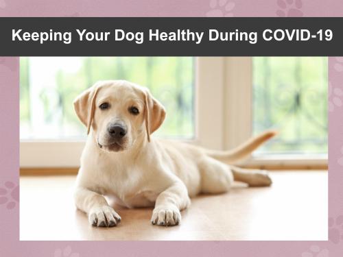 Covid healthy header