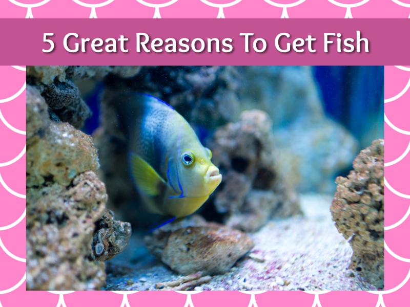 5 great reasons