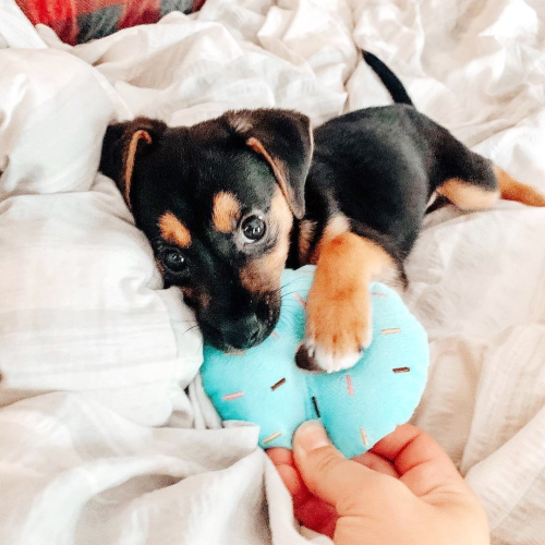 Toozey_puppy_toys_4 (1)