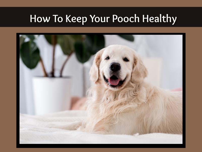 Healthy pooch