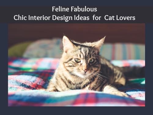 Feline header