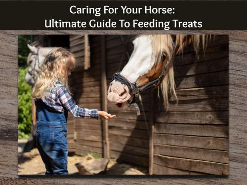 Horse treats cover