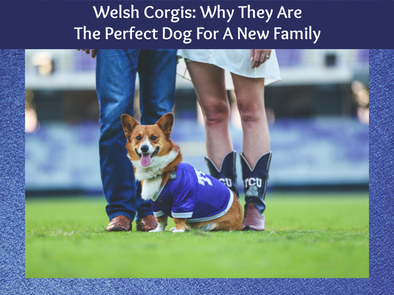 Welsh cover