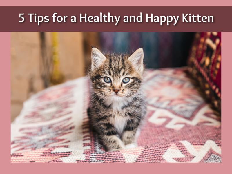 Healthy kitten cover