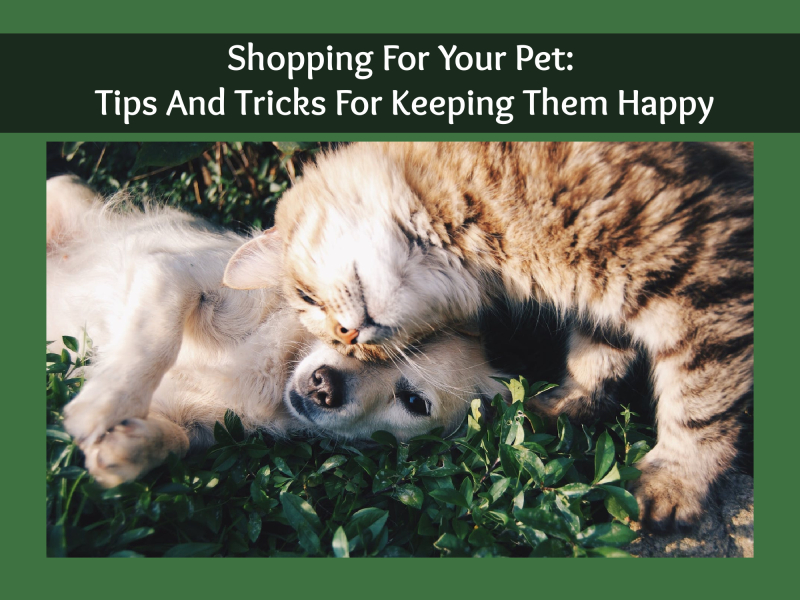 Shopping for your pet